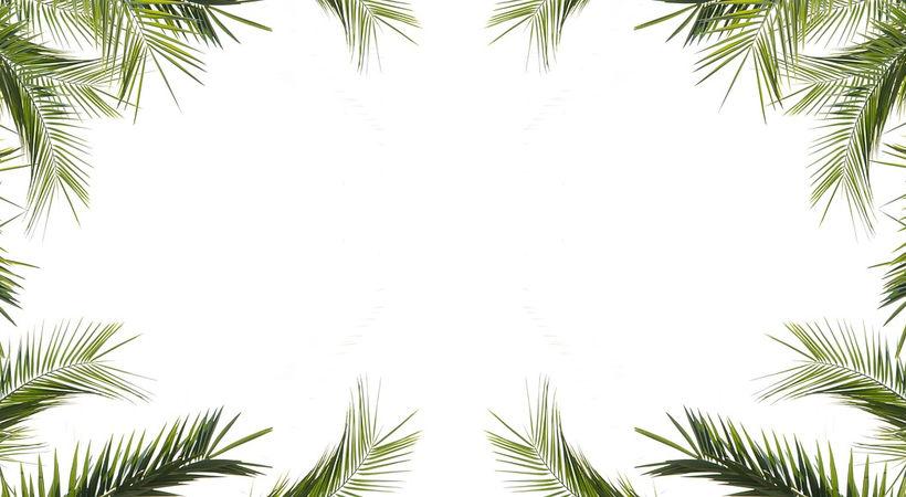 Palmesus og jubelbrus, men med bitter smak av død (Johannes 12,12–24)